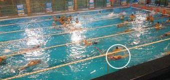 Nadadora senior local se corona campeona en el master de Santiago