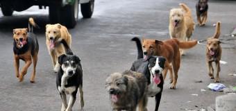 Será masiva   Este jueves invitan a aprovechar la última jornada de esterilización de mascotas