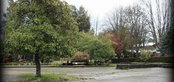 Evaluarán cada árbol antes de talar   Proyecto de remodelación plaza O`higgins podría ser modificado