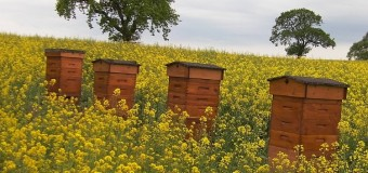 Apicultores locales llevarán miel y árboles a zona afectada por incendios