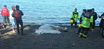 Hombre muere ahogado en sector Camping Challupén tras caer de su kayak