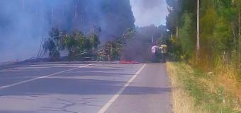 Cortaron y quemaron árboles en ruta Lanco – Panguipulli