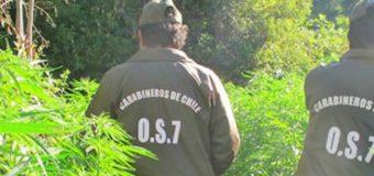 """Detienen a mujer tras hallar 15 plantas de marihuana en un """"recinto turístico"""" cerca de Chauquén"""