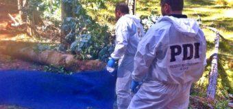 Hallan cuerpo en avanzado estado de descomposición en cercanías de Liquiñe