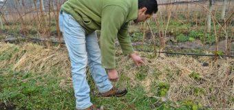 Familias del sector Champel ya cuentan con agua para riego de sus cultivos