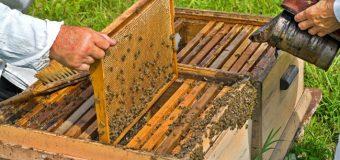 Si eres apicultor/a, ya puedes obtener un seguro para colmenas