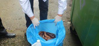 Más de 800 kilos de carne fueron decomisados durante fiestas patrias en Panguipulli