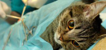 Municipio anuncia operativo masivo de esterilización de mascotas en varios sectores