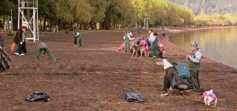 Realizan con éxito nueva jornada de limpieza en playa y humedal de Coñaripe