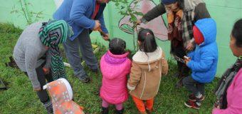 Con la plantación de un Canelo, Sala Cuna Quechumalal celebró Wetripantu