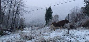 Caída de nieve obliga a cerrar paso Hua Hum. Neltume y Puerto Fuy mantiene monitoreo