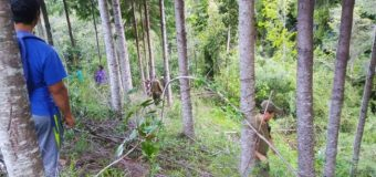 Bomberos de Villarrica y Pucón se suman a búsqueda de menor en Liquiñe