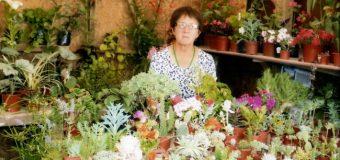 Crónicas de Muñozo: La Reina de las Flores
