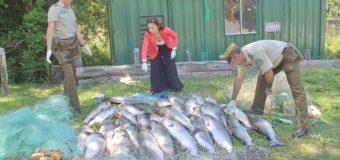 Decomisan cerca de mil kilos de peces capturados de manera ilegal en Riñihue