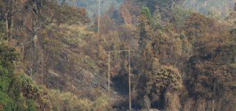 PDI investiga las causas del incendio que consumió 170 hectáreas en predio de Luksic en Rucatregua