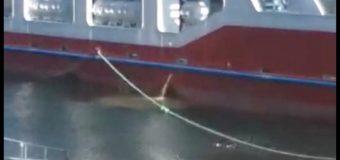 Análisis confirma que Barcaza Puerto Fuy vertió coliformes fecales en Lago Pirehueico