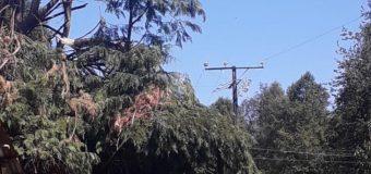 Caída de árbol dejó a 2700 clientes sin suministro entre Choshuenco y Puerto Fuy