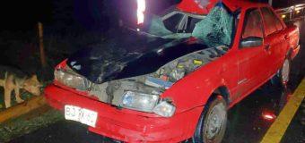 Conductor ebrio atropelló a peatón que arreaba vacuno en Liquiñe