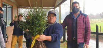 CONAF entregó 400 árboles nativos a comunidad indígena en Panguipulli