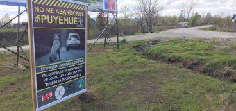 Vecinos de Puyehue se sumaron a la Campaña por Tenencia Responsable de Mascotas