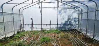 Construyen invernadero geotérmico en Liquiñe