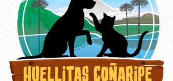 Jóvenes crean organización para ir en ayuda de animales y mascotas en Coñaripe