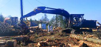 Evalúan posible daño ocular a trabajador herido durante ataque a predio forestal en Panguipulli